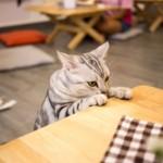【バンコクの猫カフェ】ウドンスックの「Cat Cafe by Dome」に行ってみた!