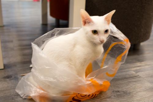 CatCafeDome ネコとあそぶ6
