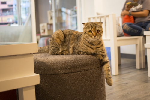 CatCafeDome ネコ4