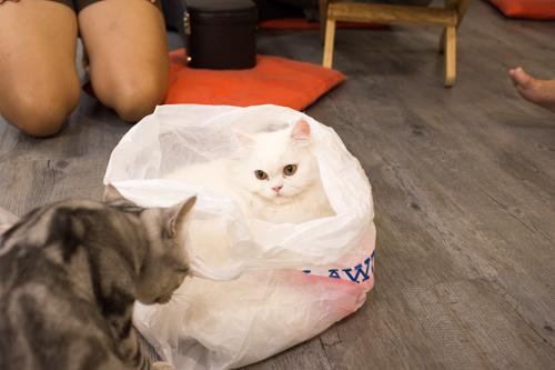 CatCafeDome ネコとあそぶ5