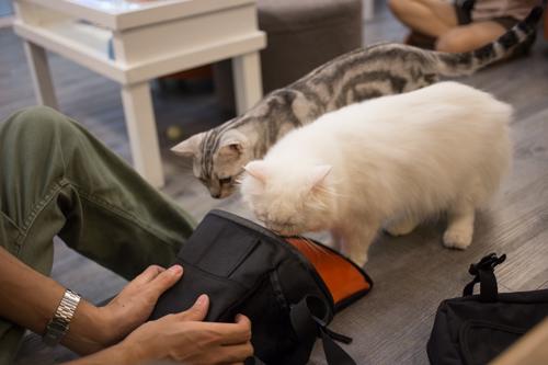 CatCafeDome ネコとあそぶ1