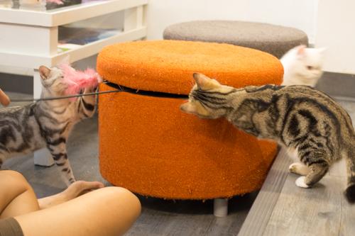 CatCafeDome ネコとあそぶ3