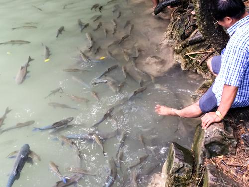 カンチャナブリー・エラワンの滝で泳いでみた。魚が人懐っこすぎて逆に気持ち悪い件