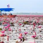 絶景!ウドンタニの赤いハスの海「タレーブアデーン」360度ハスの花につつまれる!
