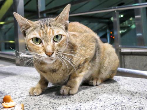 タイの野良猫 2