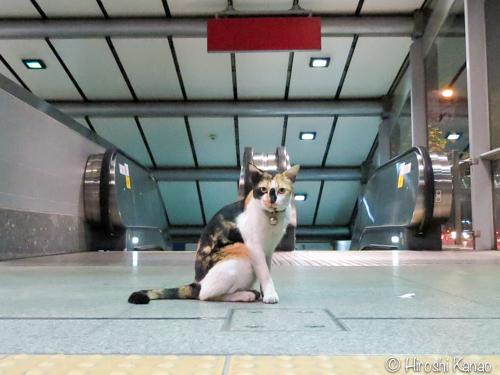 タイの野良猫 3