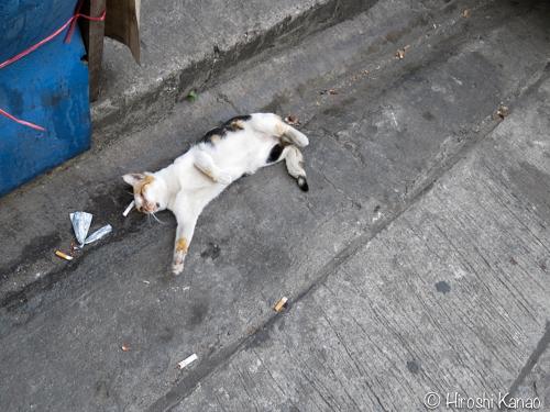 新参者の野良猫トゥントゥン