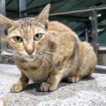 【実録】タイで野良猫に噛まれたので、狂犬病ワクチンを注射してきた。