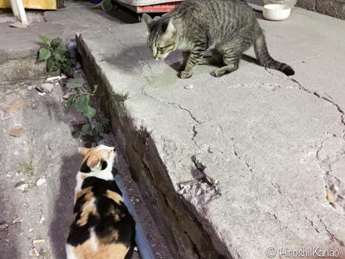 対立する野良猫