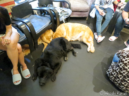 LoL Dogs Cafe 12