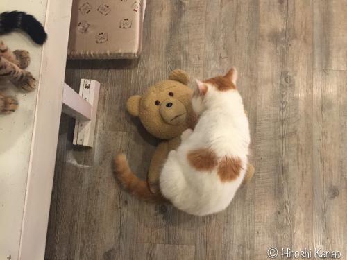 バンコク 猫カフェ 6