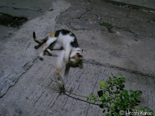 バンコク 猫 またたび7