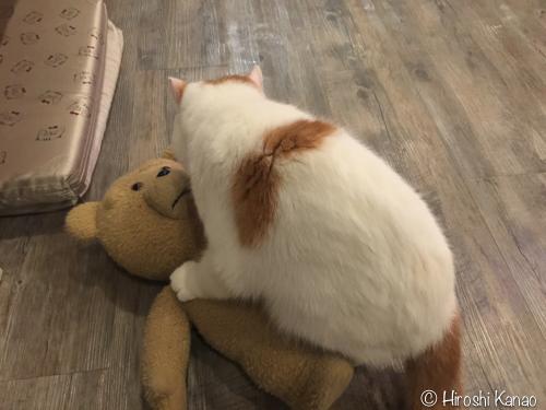 バンコク 猫カフェ 3