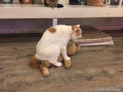 バンコク 猫カフェ 5