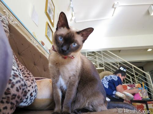 プーケットの猫カフェ「B Cat Cafe」