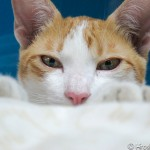 タイ猫って人懐っこすぎない?元は野良猫だった猫たちに癒やされまくる!