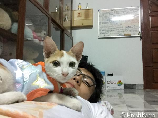 タイ猫 人懐っこい ウボン 1