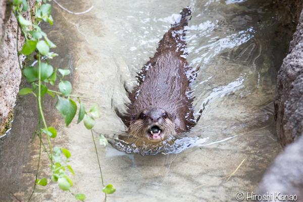 タイから贈られたゾウ アティ ウタイ 上野動物園 19
