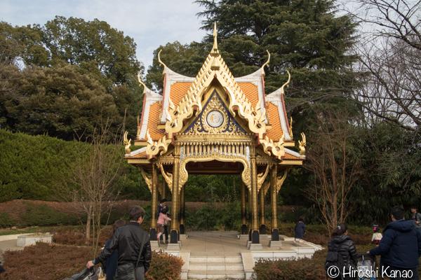 タイから贈られたゾウ アティ ウタイ 上野動物園 5