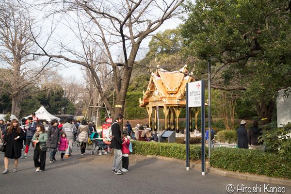 タイから贈られたゾウ アティ ウタイ 上野動物園 3