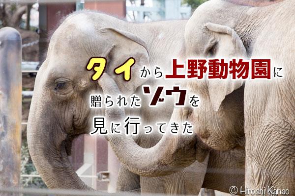 タイから贈られたゾウ「アティ」と「ウタイ」を上野動物園に見に行ってきた